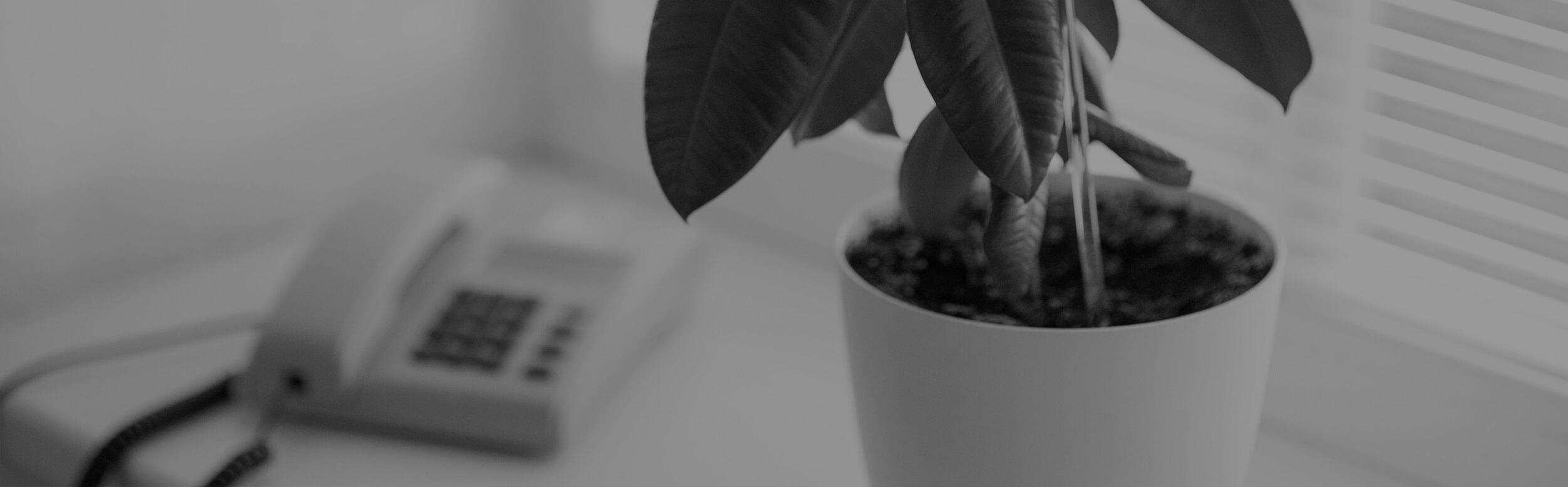 Telefón a izbová rastlina